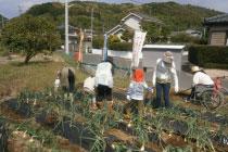 子供たちと野菜の収穫